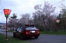 桜前線捕獲大作戦。
