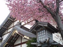 桜咲きました!!(^o^)