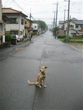 もう梅雨入り?