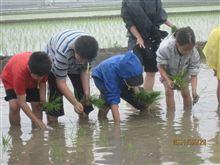 息子の農業体験(^_-)-☆