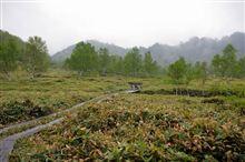 湿原を散策