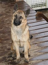 我が家のお犬様☆*:.。. o(≧▽≦)o .。.:*☆④