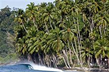 Wellcome to JUNGLE! ~surfing