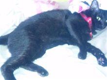 ネコと二度寝してた…