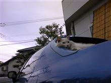 デルソルと猫 もう1枚