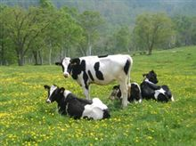 <放射性物質>セシウム汚染牛肉9都道府県流通