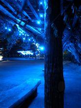 深夜の散歩ドライブ