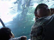 先ずは…結局(?)水族館w