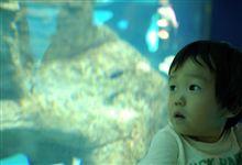 涼を求めて水族館