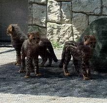 多摩動物公園へ行ってきました