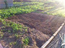 1日畑作業しました。
