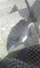 紀州釣りについて(その1)