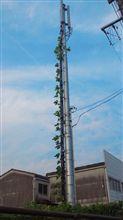 携帯電話会社のアンテナに「つた」ケーブルが巻き付いてます