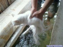 ネコと足湯でニューヨーク☆