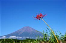 富士山と彼岸花