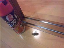 ゴキブリ殺人事件について