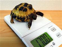 2011.09.29 かめ吉の身体測定