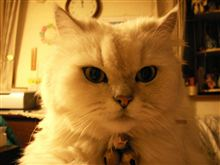 もう一匹の猫のおはなし