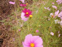秋の花~♬   (10/25)火曜日)