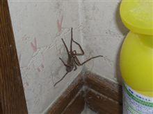 コワい蜘蛛(※不快感を与える恐れありですのでご注意を...)