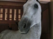 惚れてまうがなー お馬さん
