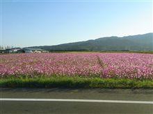 お花見に行きたい(T_T)