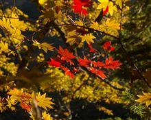 秋の山梨・西沢渓谷