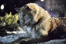 HACHI 約束の犬