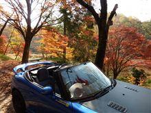 秋ですね~♪
