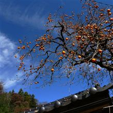 紅葉と林檎