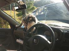 ネコと洗車と冬タイヤ