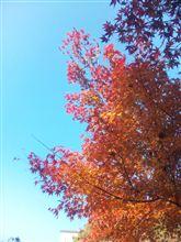 赤や黄色の紅葉は今が見頃ですね