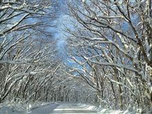 八甲田山の雪化粧