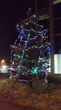 【小ネタ】会社正門にクリスマスツリーが・・・(#^.^#)