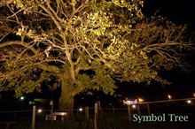 わが町のシンボルツリー♪