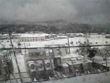 米原は雪ですね~