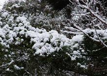 ・・・大雪?