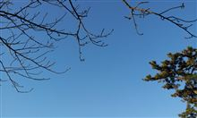 冬深まれども、春もまた近し(^_^)