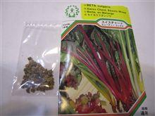 西洋野菜シリーズ スイスチャード種まき