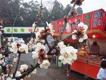 梅の開花は・・・
