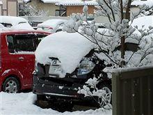 雪だあ~!