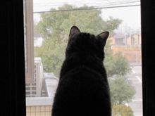 外を眺め・・・?
