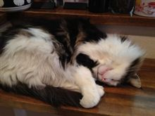 猫アレルギー、猫カフェへ行く。