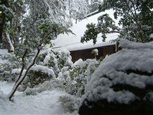 雪降り・・大安吉日・・・新しい出会い・・・