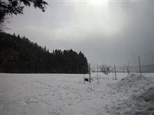 雪降・・・