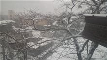 予報通り 雪で