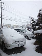 雪だよ雪(;´д`ノ)ノ