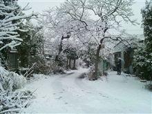 雪~♪テンションMAX