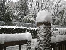 【雪の日の運転】