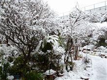 今日は雪の為!